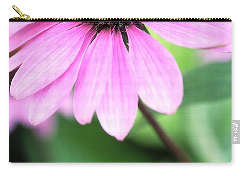 Cone Carry-all Pouch featuring the photograph Cone Flower 3 by Neil Overy