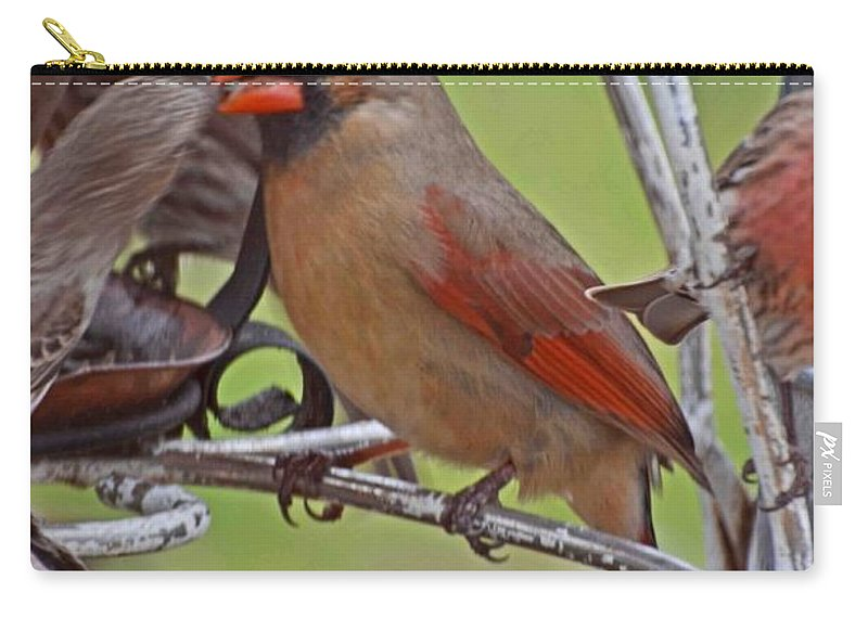 Nature Carry-all Pouch featuring the photograph Confrontation by Debbie Portwood