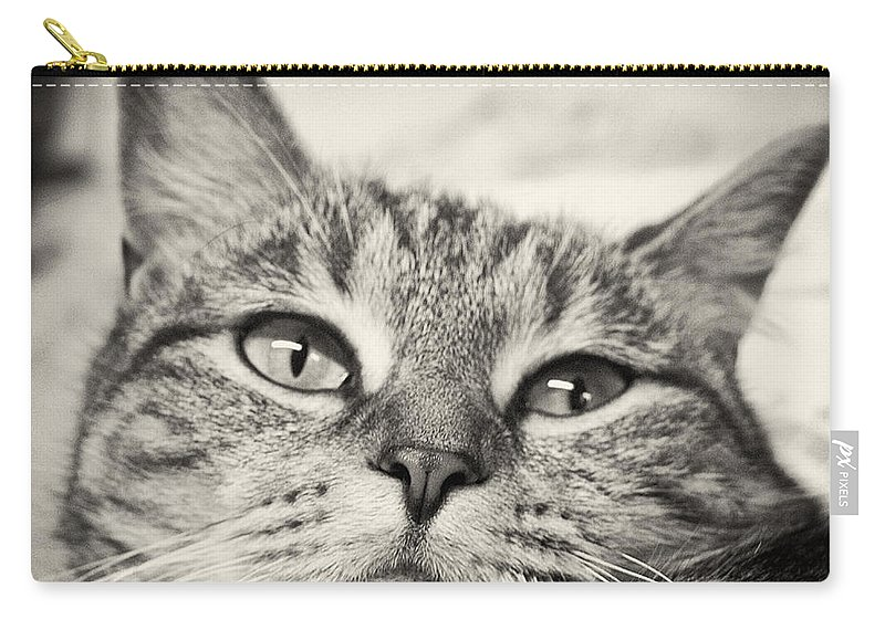 Cat Carry-all Pouch featuring the photograph Content by Scott Wyatt