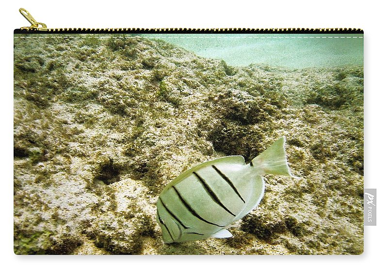 Hanauma Bay Carry-all Pouch featuring the photograph Convict Tang by Michael Peychich