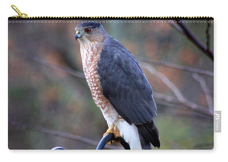 Predator Carry-all Pouch featuring the photograph Coopers Hawk In Autumn by Karen Adams