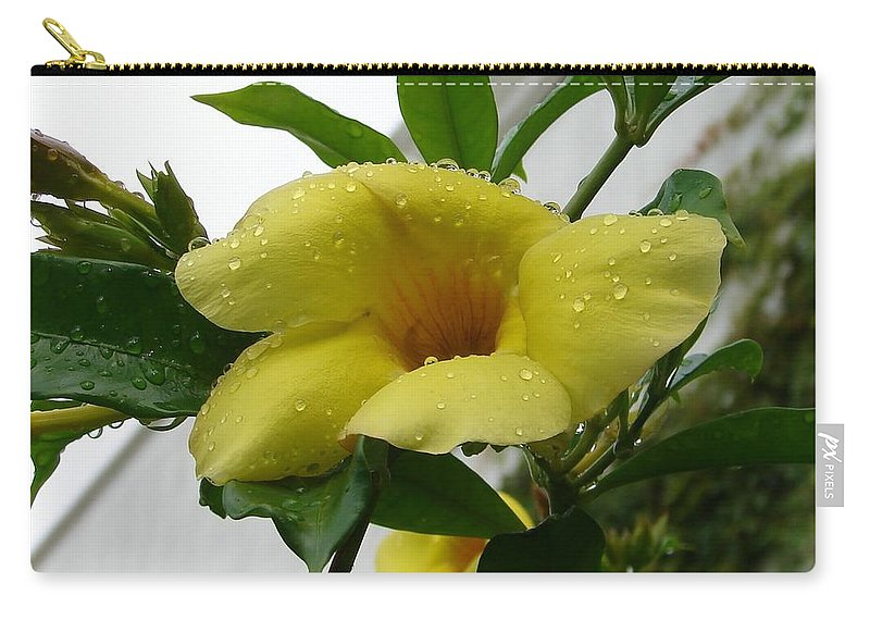 Yellow Water Drops Flower Green Leaves Carry-all Pouch featuring the photograph Copa De Oro by Luciana Seymour