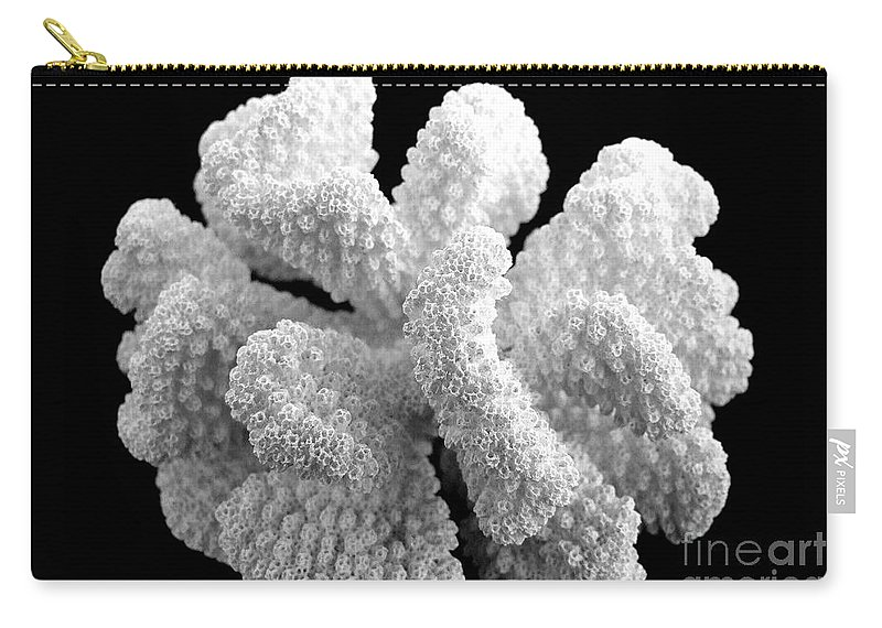Mary Deal Carry-all Pouch featuring the photograph Coral by Mary Deal