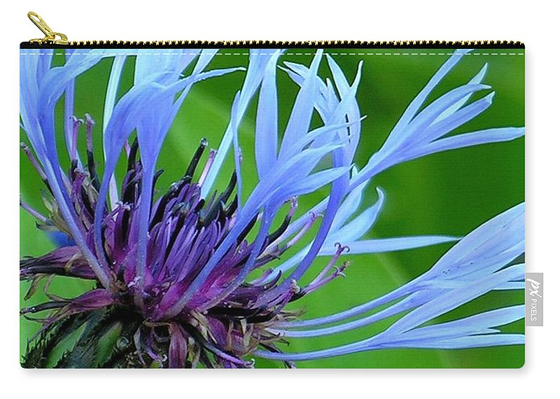 Blue Carry-all Pouch featuring the photograph Cornflower Centaurea Montana by Diane Greco-Lesser