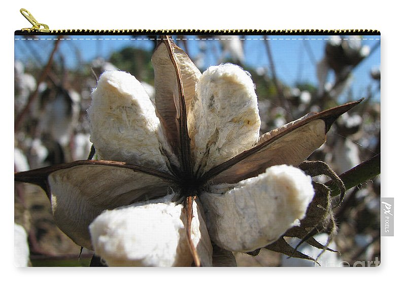 Cotton Carry-all Pouch featuring the photograph Cotton by Amanda Barcon