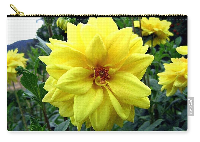 Yellow Dahlias Carry-all Pouch featuring the photograph Country Dahlias by Will Borden