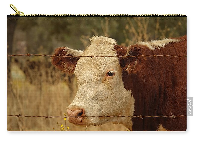 Cow Photo Carry-all Pouch featuring the photograph Cows by Elizabeth Waitinas