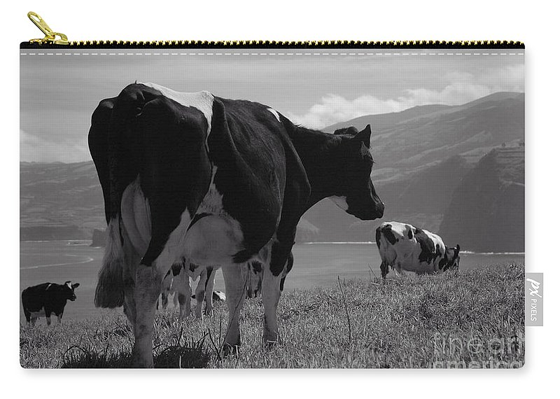 Azoren Carry-all Pouch featuring the photograph Cows by Gaspar Avila