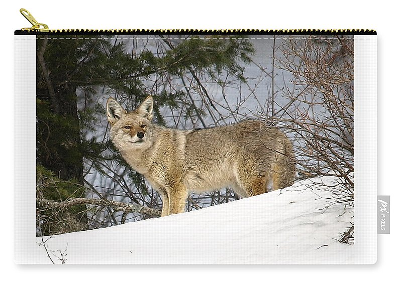 Coyote Carry-all Pouch featuring the photograph Coyote In Winter by DeeLon Merritt