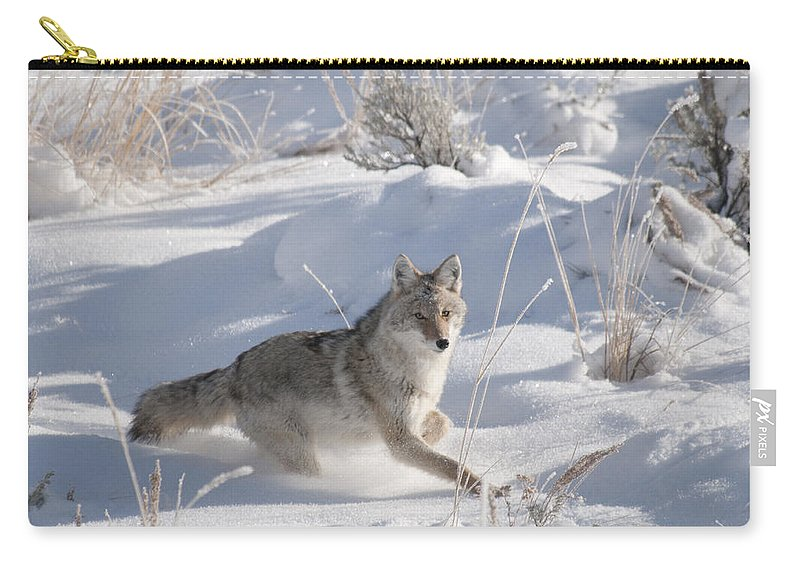 Coyote Carry-all Pouch featuring the photograph Coyote On The Move by Gary Beeler