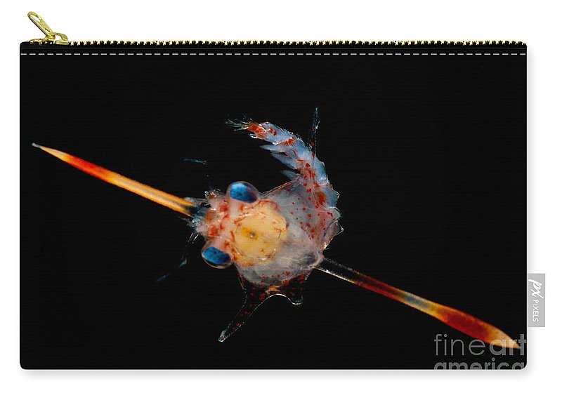 Pelagic Carry-all Pouch featuring the photograph Crab Zoea by Dant� Fenolio