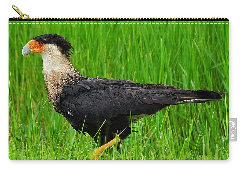 Crested Caracara Carry-all Pouch featuring the photograph Crested Caracara 2 by Amy Spear