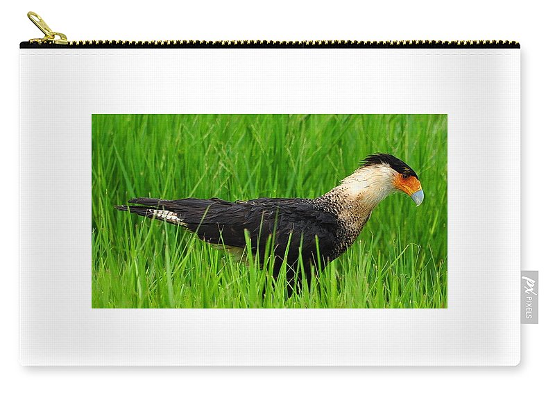 Crested Caracara Carry-all Pouch featuring the photograph Crested Caracara 4 by Amy Spear