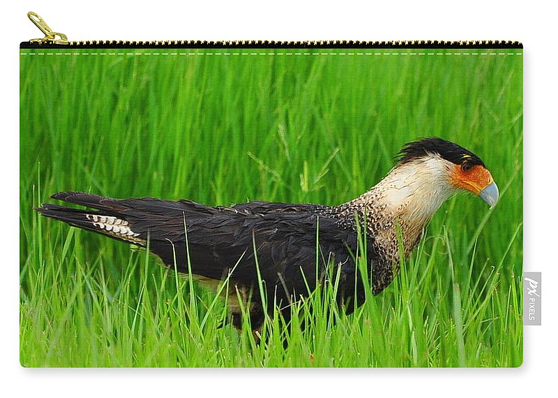 Crested Caracara Carry-all Pouch featuring the photograph Crested Caracara 5 by Amy Spear