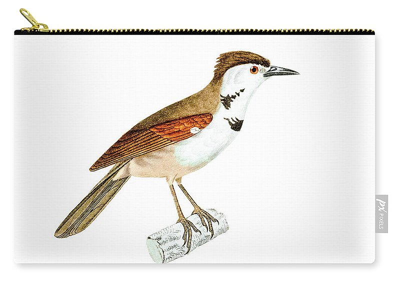 Bird Carry-all Pouch featuring the photograph Crested Rustic 2 by Douglas Barnett
