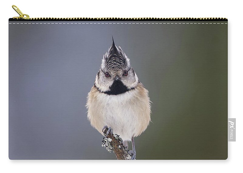 Crested Carry-all Pouch featuring the photograph Crested Tit by Peter Walkden