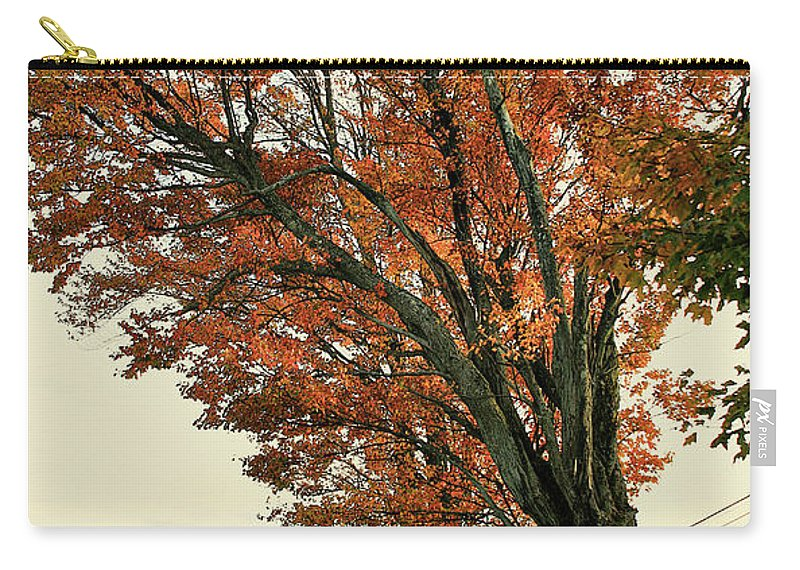 Tree Carry-all Pouch featuring the photograph Crooked Tree by Deborah Benoit