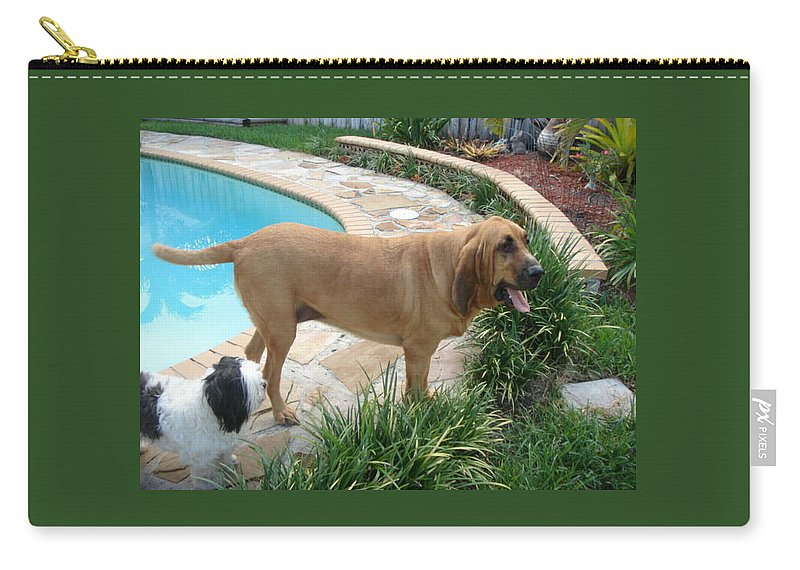 Bloodhound Carry-all Pouch featuring the photograph Cujo And Lucky By The Pool by Val Oconnor