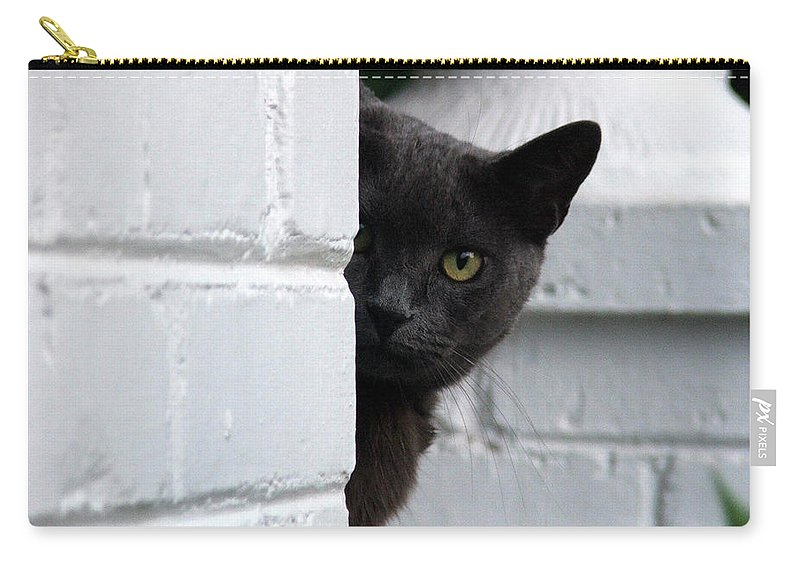 Cats Carry-all Pouch featuring the photograph Curiosity by Robert Meanor