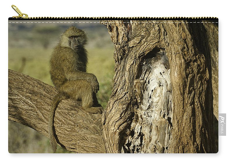 Africa Carry-all Pouch featuring the photograph Curious Baboon by Michele Burgess