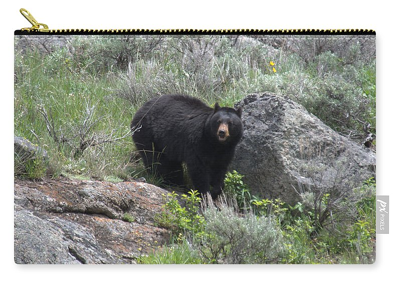 Black Bear Carry-all Pouch featuring the photograph Curious Black Bear by Frank Madia