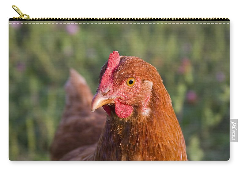 Chicken Curious Brown Red Green Grass Farm Rural Carry-all Pouch featuring the photograph Curious Chicken by Andrei Shliakhau