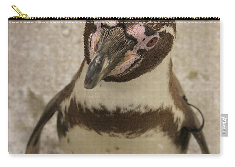 Penguin Carry-all Pouch featuring the photograph Curious Penguin by Ian Middleton