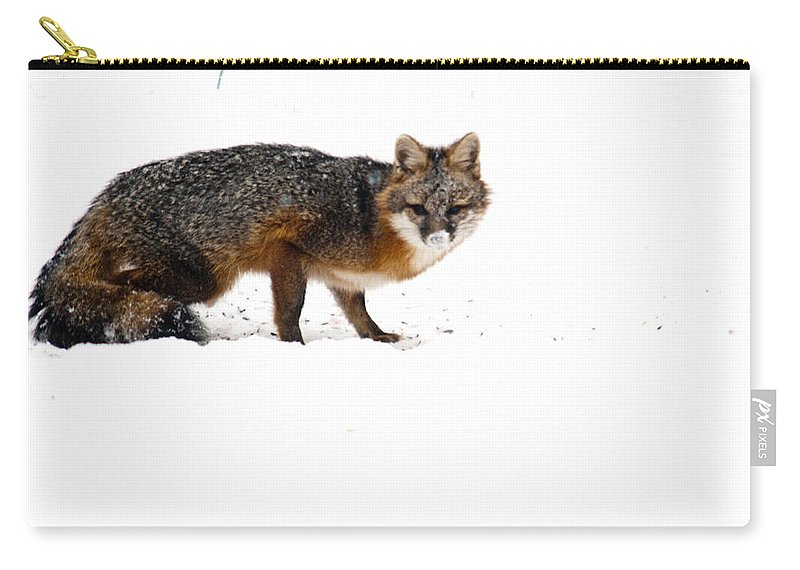 Red Carry-all Pouch featuring the photograph Curious Red Fox In Snow by Douglas Barnett