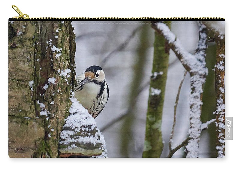 Dendrocopos Leucotos Carry-all Pouch featuring the photograph Curious White-backed Woodpecker by Jouko Lehto