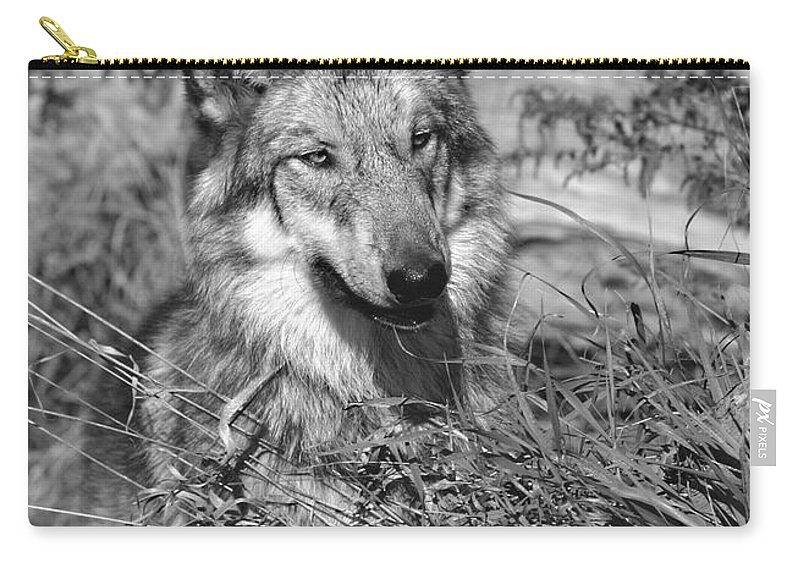 Wolf Pup Carry-all Pouch featuring the photograph Curious Wolf Pup by Shari Jardina
