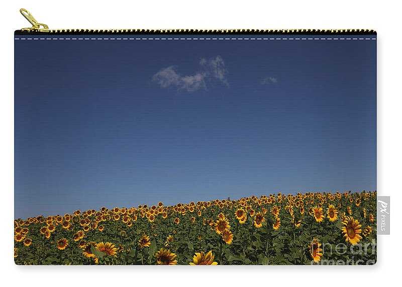 Sunflowers Carry-all Pouch featuring the photograph Curvature by Amanda Barcon