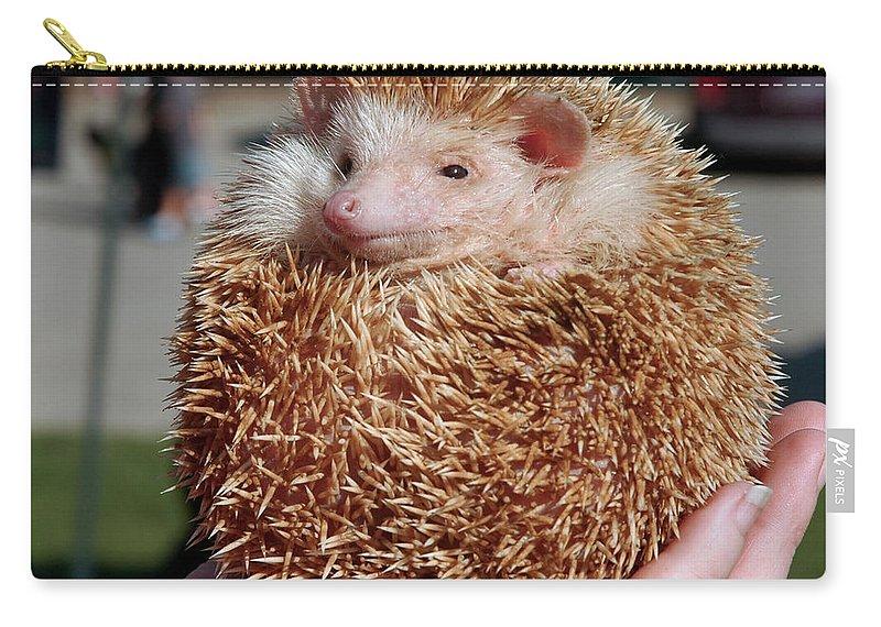 Usa Carry-all Pouch featuring the photograph Cute Little Hedge Ball by LeeAnn McLaneGoetz McLaneGoetzStudioLLCcom