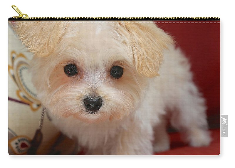 Dog Carry-all Pouch featuring the photograph Cute Maltipoo by Carol Groenen