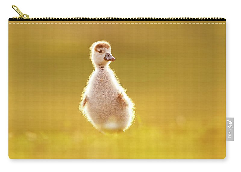 aac92de038a7 Bird Carry-all Pouch featuring the photograph Cute Overload - Baby Gosling  by Roeselien Raimond