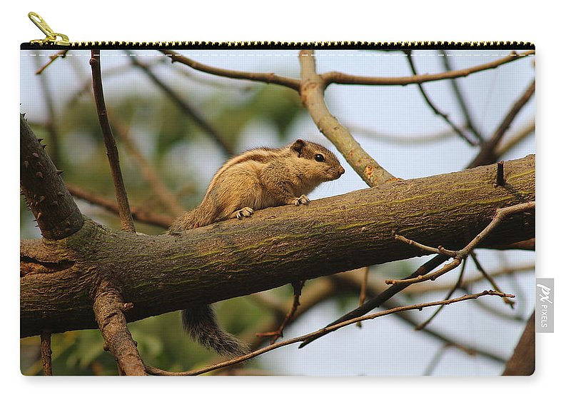 Squirrel Carry-all Pouch featuring the photograph Cuteness by Vikram Kumar