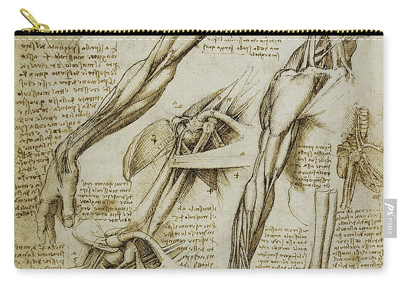 Da Vinci Man Right Arm And Shoulder Anatomy By Da Vinci Carry-all ...
