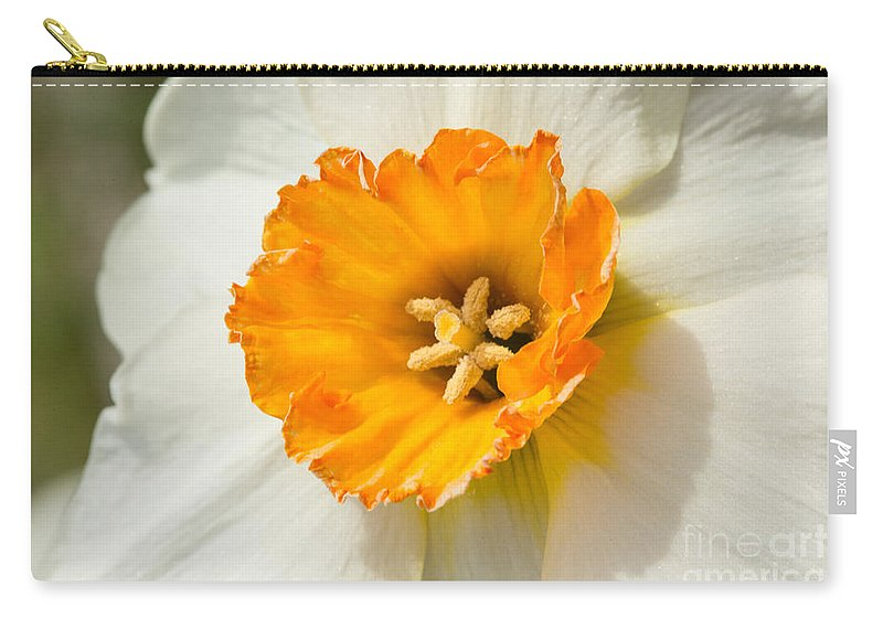 Daffodil Narcissus Flower Carry-all Pouch featuring the photograph Daffodil Narcissus Flower by Iris Richardson
