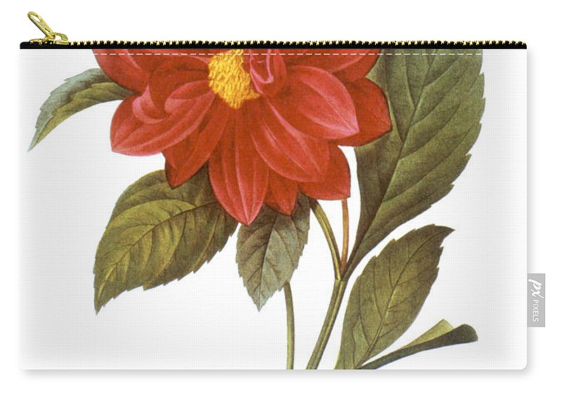 1833 Carry-all Pouch featuring the photograph Dahlia (dahlia Pinnata) by Granger