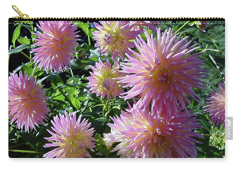 Group Carry-all Pouch featuring the photograph Dahlia Group by Shirley Heyn