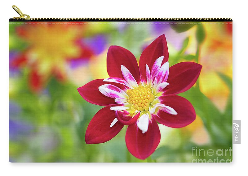 Dahlia Carry-all Pouch featuring the photograph Dahlia by Mimi Ditchie