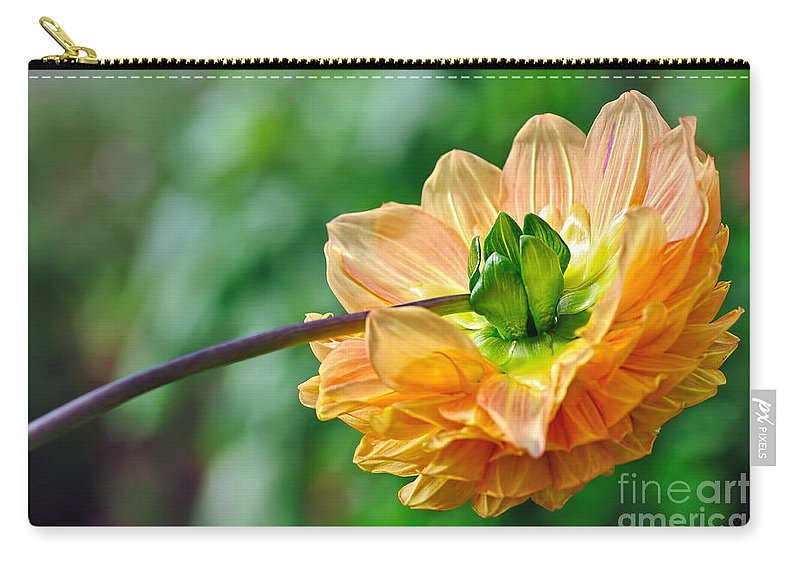 Photography Carry-all Pouch featuring the photograph Dahlia Resting by Kaye Menner