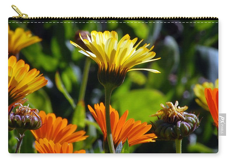Dasy Carry-all Pouch featuring the photograph Daisies by Amy Fose