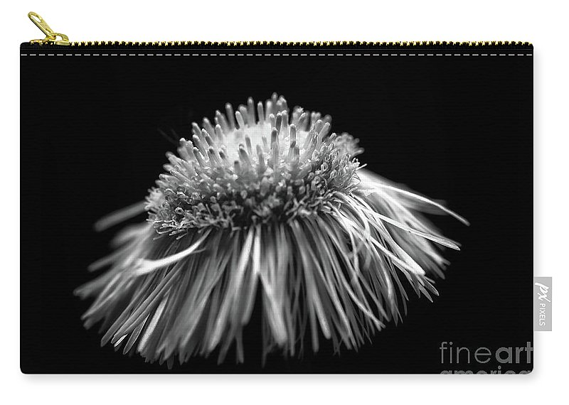 Carry-all Pouch featuring the photograph Daisy Flea Bane 0619c by Howard Roberts
