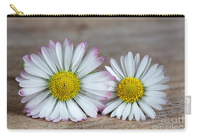 Yellow Carry-all Pouch featuring the photograph Daisy Flowers by Nailia Schwarz