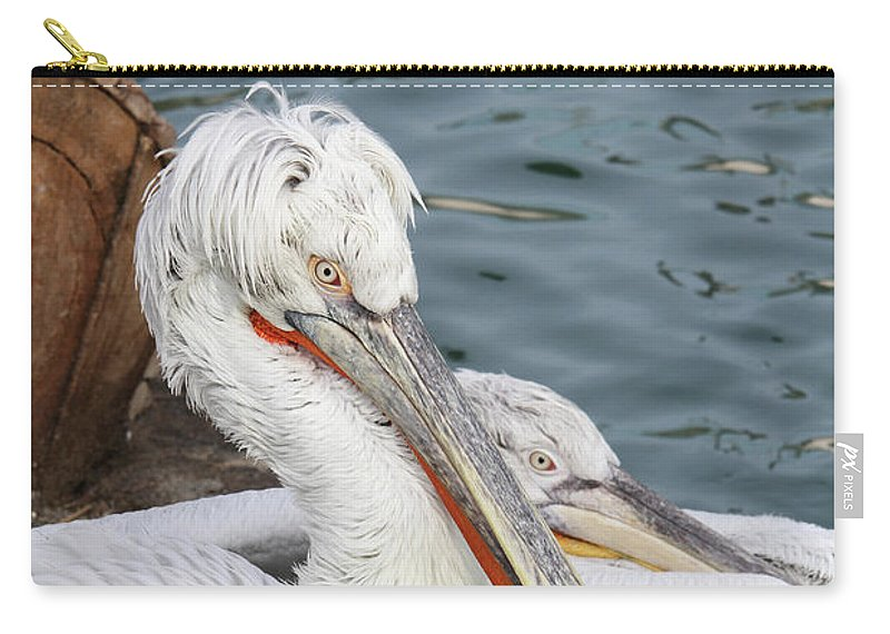 Pelican Carry-all Pouch featuring the photograph Dalmatian Pelican #3 by Judy Whitton