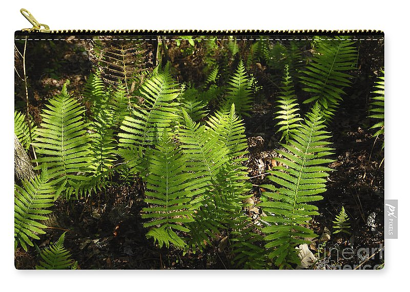 Ferns Carry-all Pouch featuring the photograph Dancing Ferns by David Lee Thompson