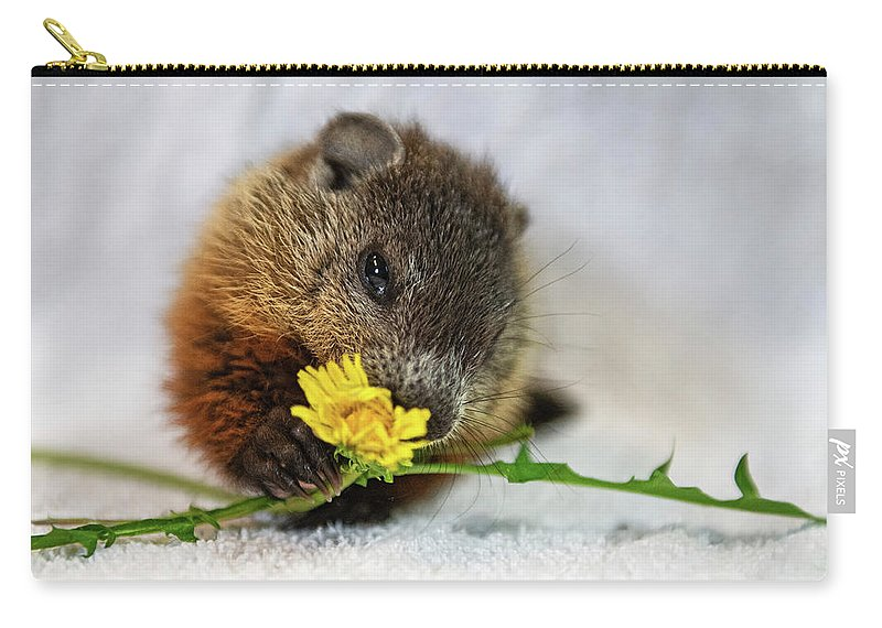 Nina Stavlund Carry-all Pouch featuring the photograph Dandelion Love by Nina Stavlund