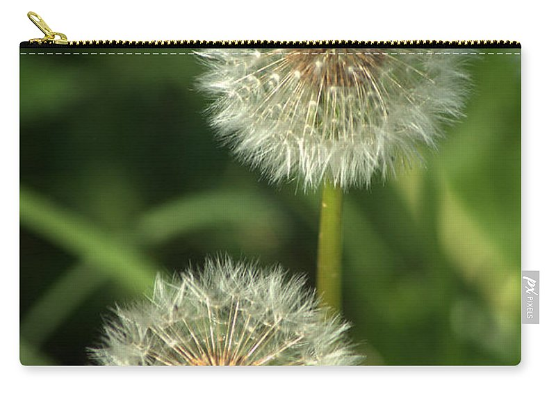 Dandelion Carry-all Pouch featuring the photograph Dandelion Seed Heads by Chris Day