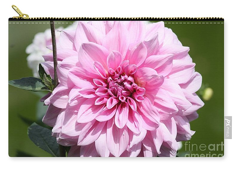 Dahlia Carry-all Pouch featuring the photograph Danielle's Dahlia by Carol Groenen