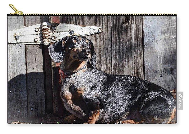 Dachshund Carry-all Pouch featuring the photograph Dapple Dachshund by Steven Miller